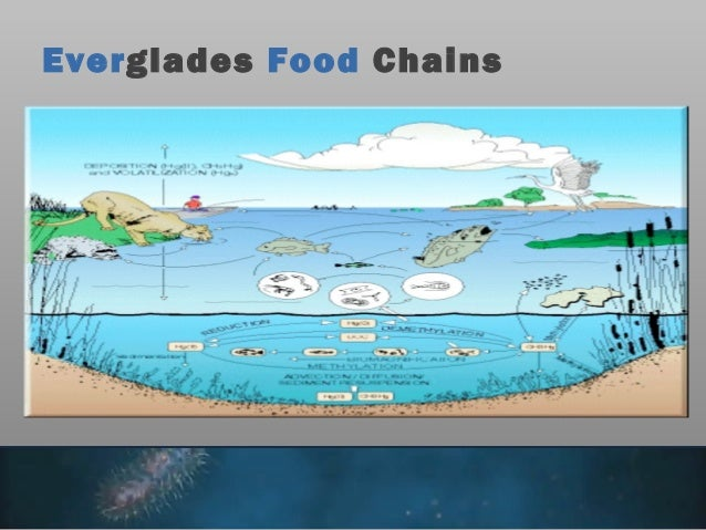 everglades food stuff web