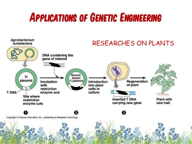 genetic engineering between a tree and What is the difference between genetic engineering and recombinant dna technology genetic engineering and recombinant dna technology are interrelated.