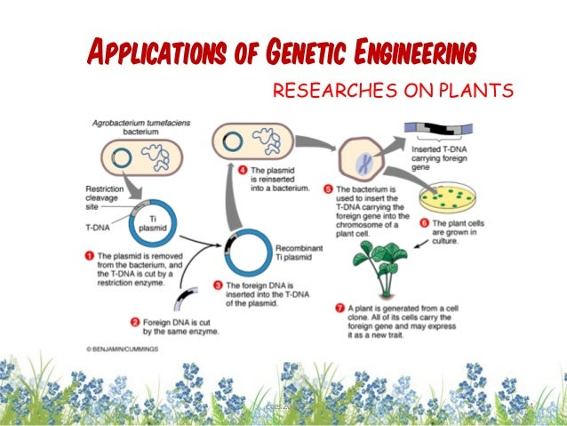 genetic engineering 22 A potentially useful technology, genetically engineered or modified food has been pushed through the us and increasingly around the world very quickly without enough.