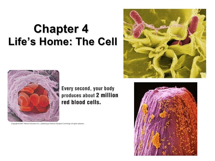 Chapter 4  Life's Home: The Cell