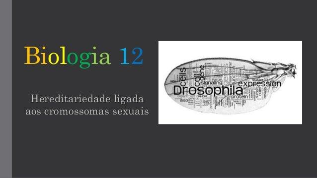 Biologia 12 Hereditariedade ligada aos cromossomas sexuais
