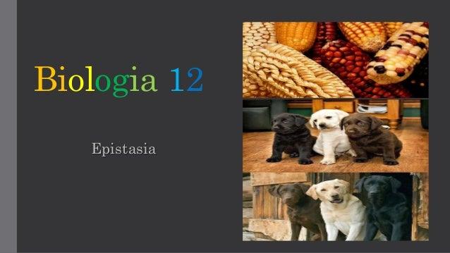 Biologia 12 Epistasia