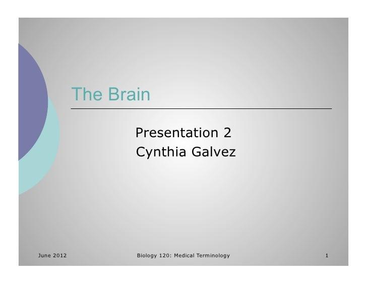 The Brain                   Presentation 2                   Cynthia GalvezJune 2012          Biology 120: Medical Termino...