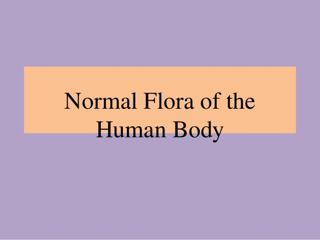 normal body flora How bacteria rule over your body – the microbiome - duration: 7:39 kurzgesagt – in a nutshell 3,119,729 views 7:39  the gut flora: you and your.