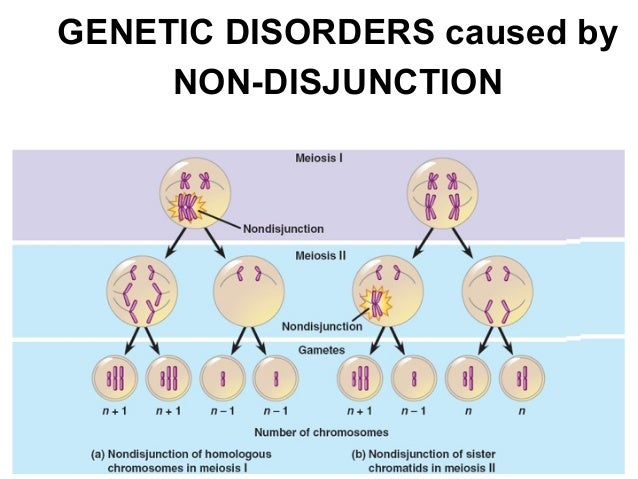 Chapter 14 Human Genetics – Human Genetic Disorders Worksheet