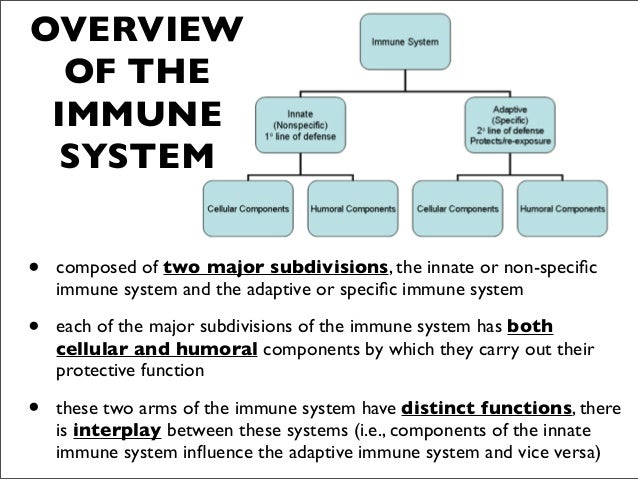 overview of the immune system essay Body defenses & immunity immunity = resistance to disease the immune system provides defense against all the microorganisms and toxic cells to which we are exposed  without it we would not.