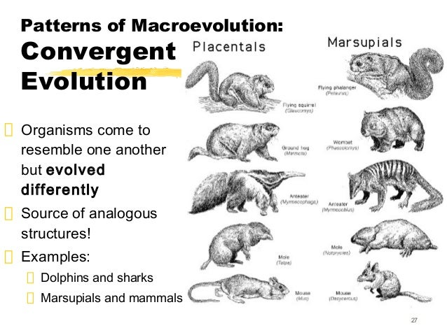 Bio 163 evolution lmk 2013 for moodle