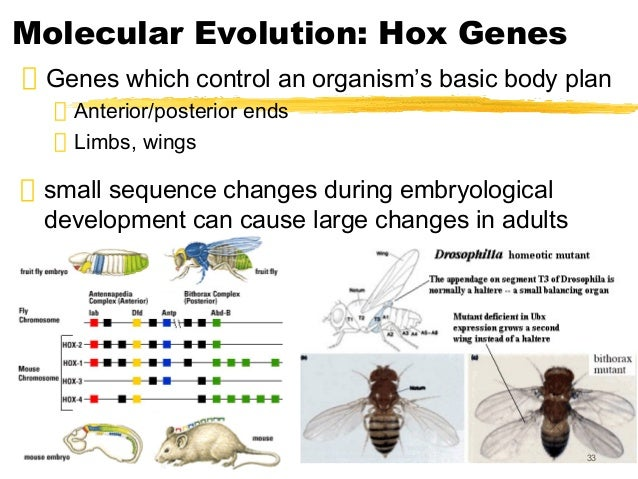 Is Natural Selection A Cause Or Effect Of Organic Evolution