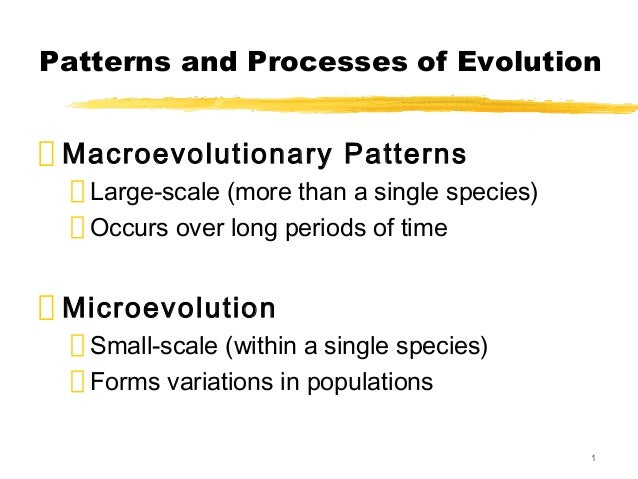 Patterns and Processes of Evolution Macroevolutionary Patterns   Large-scale (more than a single species)   Occurs over lo...