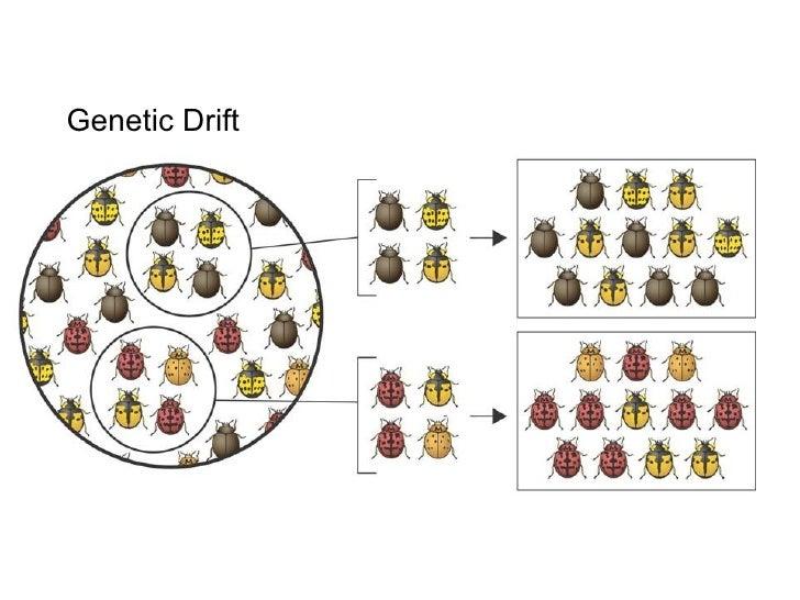 003 - Genetic Drift