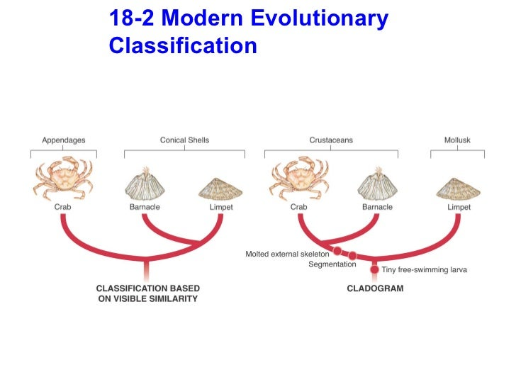 the history of modern classification Biological classification taxonomy  be assigned a new high level classification, archaea see history  the modern classification is based on genetic research.