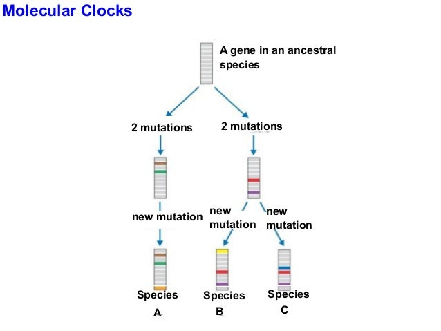 Chapter 18- Classification of Life
