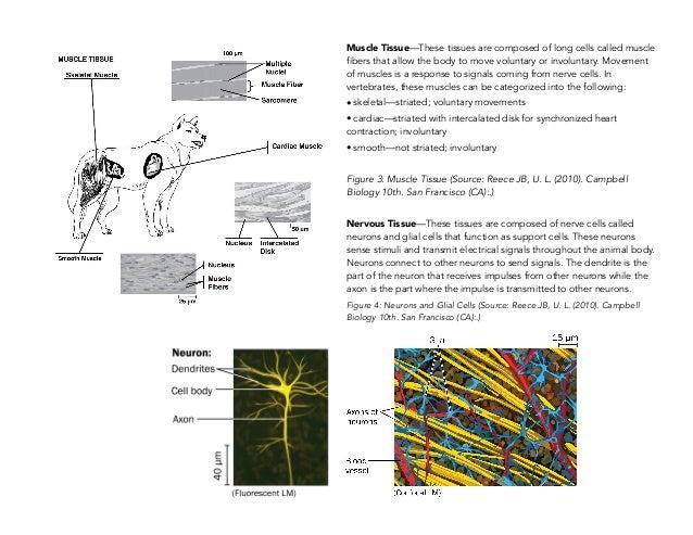 Campbell Biologie Francais Pdf Download - softprosoftorg