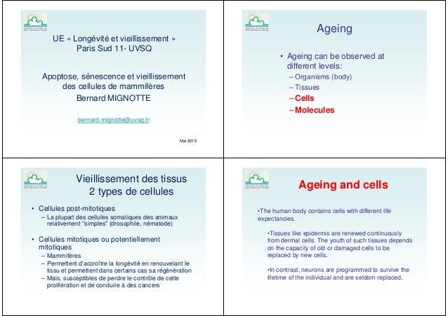 UE « Longévité et vieillissement »Paris Sud 11- UVSQApoptose, sénescence et vieillissementApoptose, sénescence et vieillis...