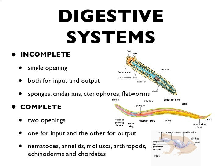 Bio 22 Post Lab Exam 3 together with Circulation And Cardiovascular System also Class Osteichthyes additionally Information System And Control Audit Lecture I moreover C9DEC3B0 92DC 4130 A33B 4E0B4BEA97E8. on closed circulatory system