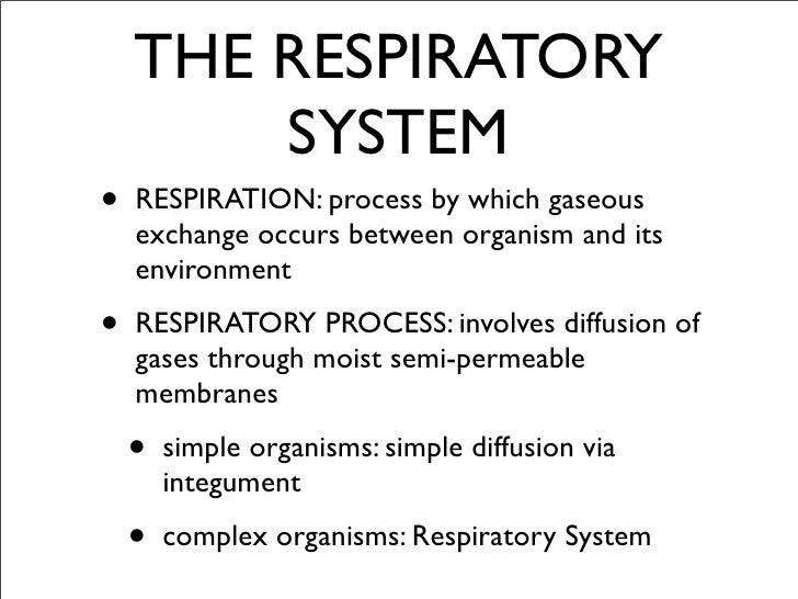 an examination of gills respiratory system Most use gills as their respiratory system,  anyone can earn credit-by-exam regardless of age or education level  chordata respiratory system.