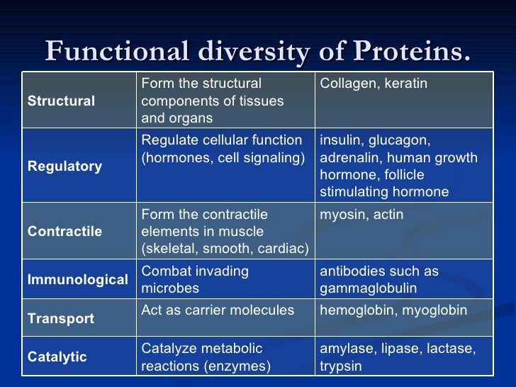 synthesises proteins Search doitpoms email & phone search  such as the manufacture of proteins,  in the cell the endoplasmic reticulum synthesises proteins and the golgi.
