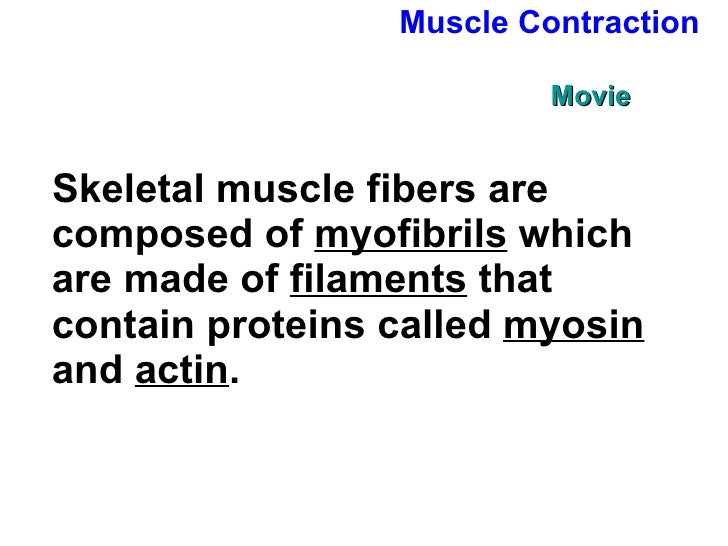 Chapter 36 lecture- Bones & Muscles