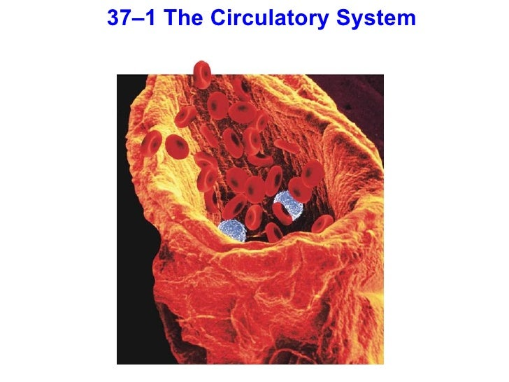 Chapter 37 lecture- Ci...