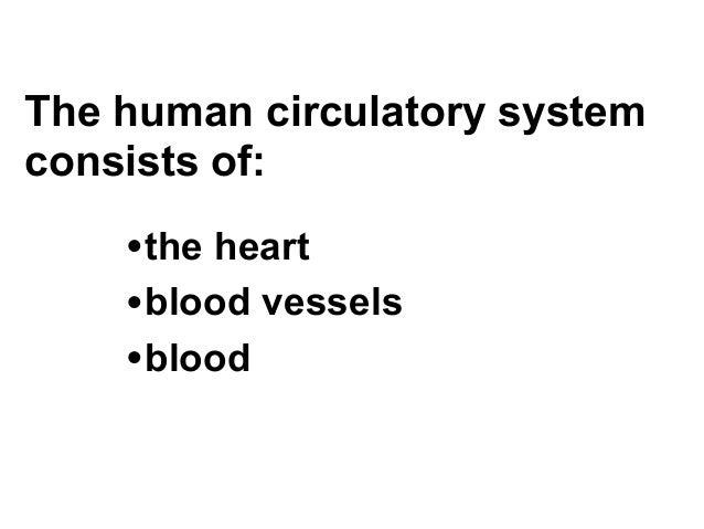 Chapter 37- Circulatory and Respiratory Systems