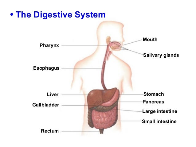 Digestive Excretory Systems Chapter 38