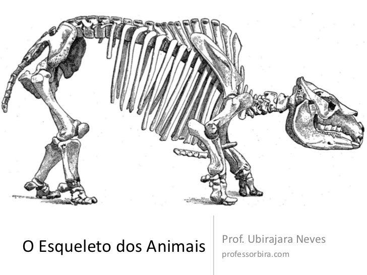 Prof. Ubirajara NevesO Esqueleto dos Animais   professorbira.com