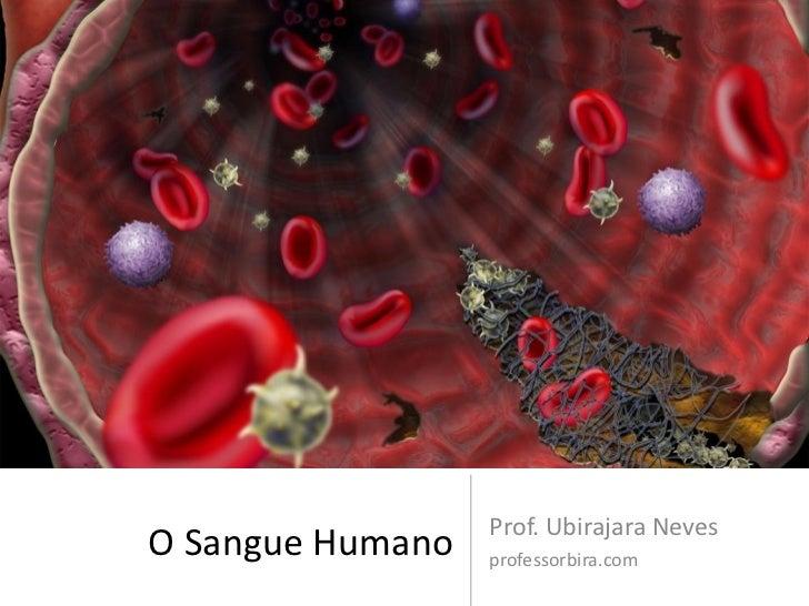 Prof. Ubirajara NevesO Sangue Humano   professorbira.com