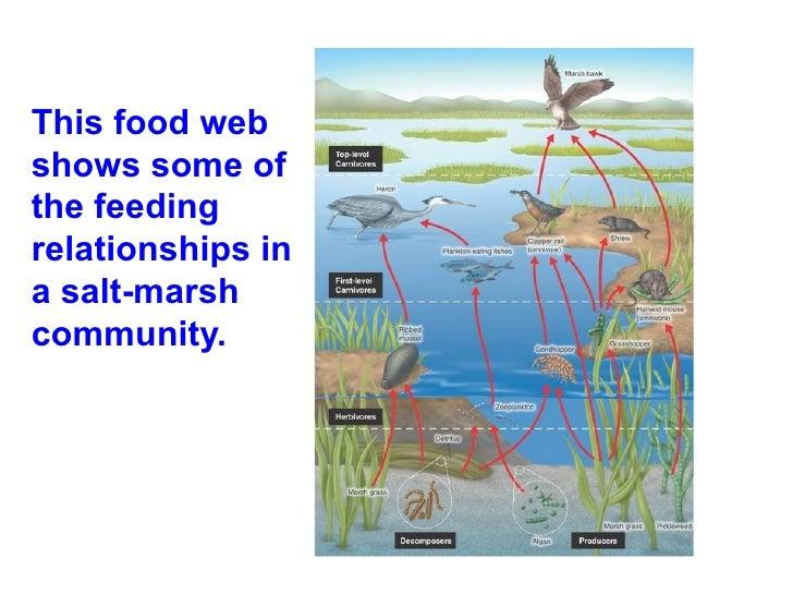 Marsh Free Food