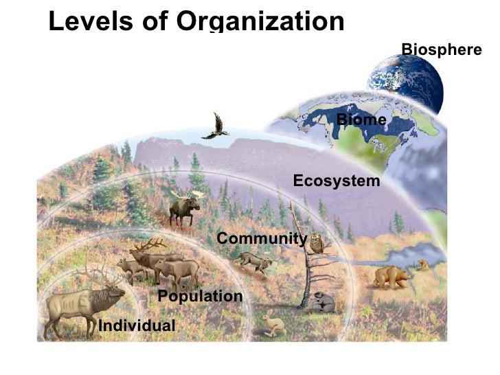 ecosystem and biomes relationship help