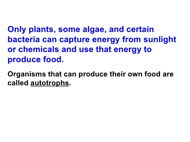 How Can Organisms Produce Food Without Sunlight