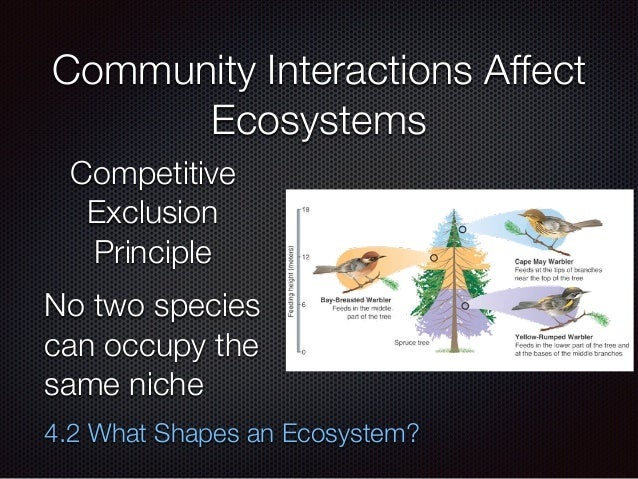 Chapter Four Lecture- Ecosystems