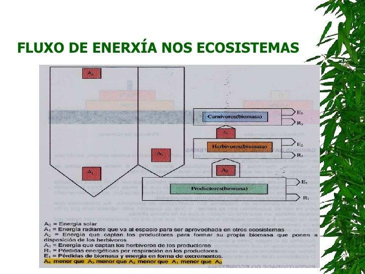 FLUXO DE ENERXÍA NOS ECOSISTEMAS