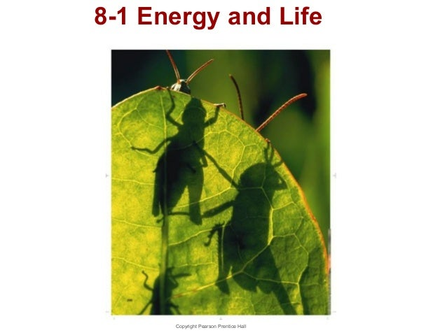 8-1 Energy and Life  Copyright Pearson Prentice Hall