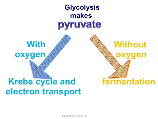 The Advantages of Anaerobic Respiration