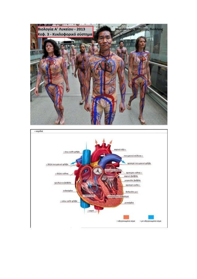 Βιολογία Α' Λυκείου - Κυκλοφορικό σύστημα (Κεφ.3)