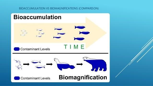 bioaccumulation amp biomagnifications