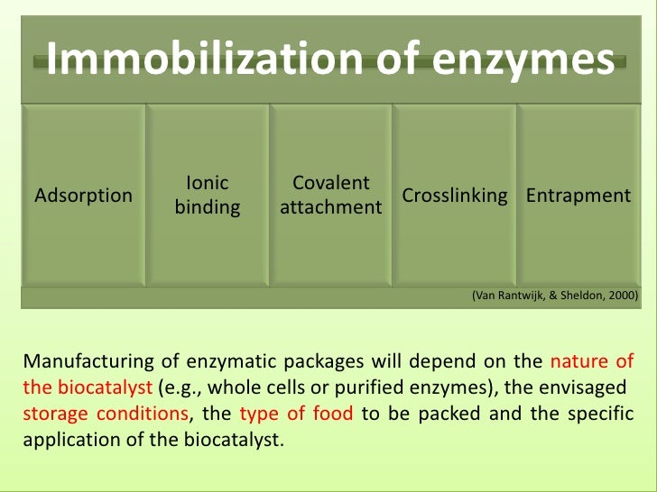Therapeutic Applications of Immobilized Enzymes