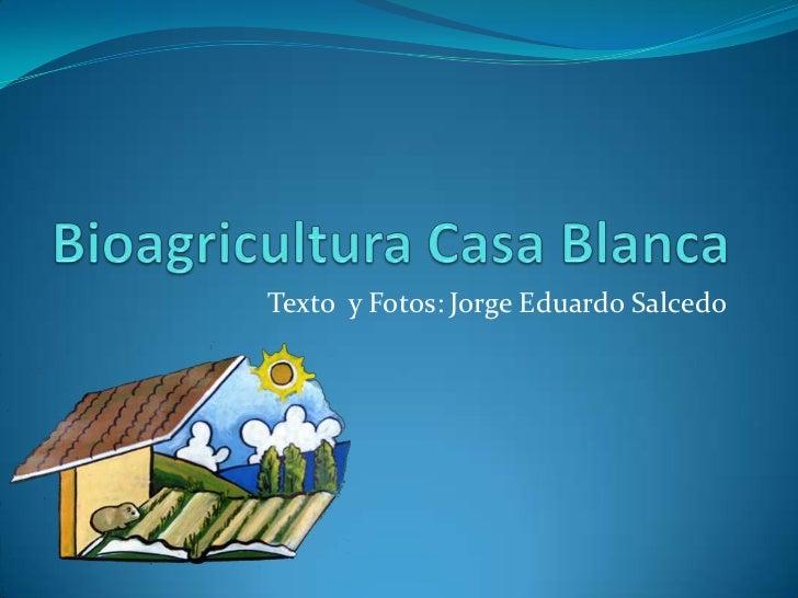Bioagricultura Casa Blanca<br />Texto  y Fotos: Jorge Eduardo Salcedo<br />