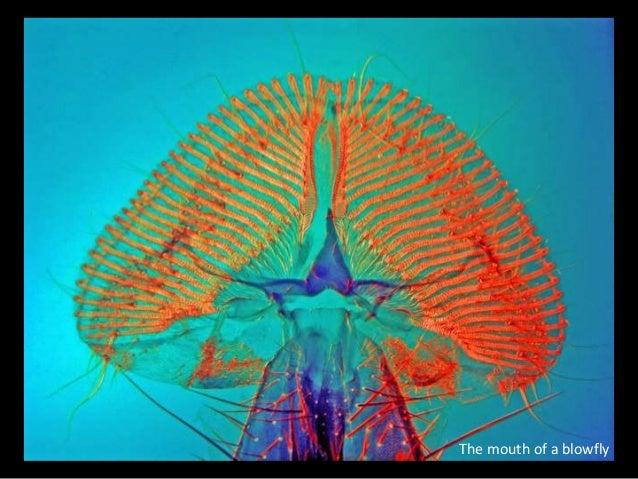 Biocanvas Microscopic Images Slide 3
