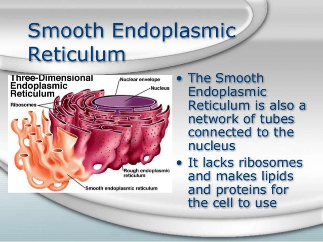 analogy for smooth er endoplasmic reticulum analogy - Save.btsa.co