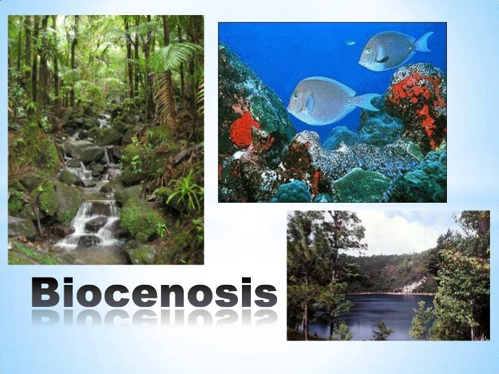 Se llama biocenosis al                                    conjunto de animales,                                    vegetal...