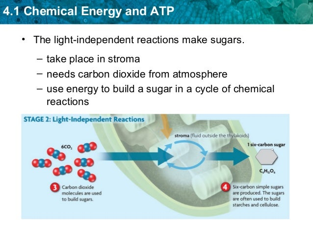 notes on cellular respiration photosynthesis Cellular respiration notes cellular respiration is the process of using oxygen in the mitochondria to chemically relationship between photosynthesis and respiration.