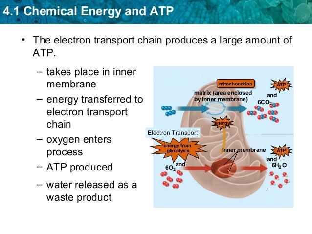 Atp Photosynthesis Amp Cellular Respiration Notes