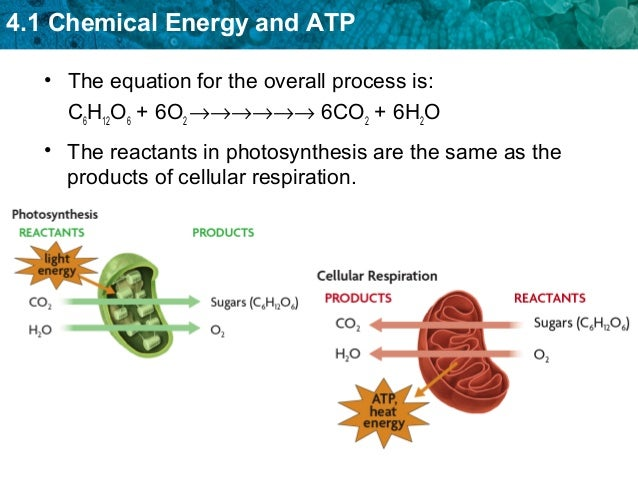 cellular photosynthesis respiration chemical atp energy notes equation unit overview ch04 bio waste molecules water same transport released resp