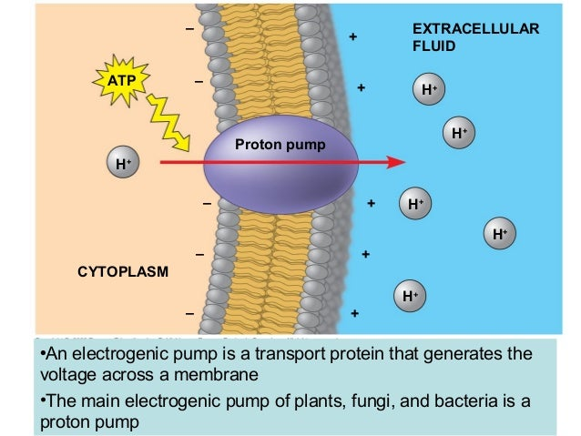 Chapter 7  Cell Membrane