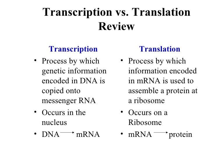 Diagram of transcription versus translation complete wiring diagrams biochem synthesis of rna june 23 2010 rh slideshare net flow diagram of transcription and translation diagram of replication transcription and translation ccuart Choice Image