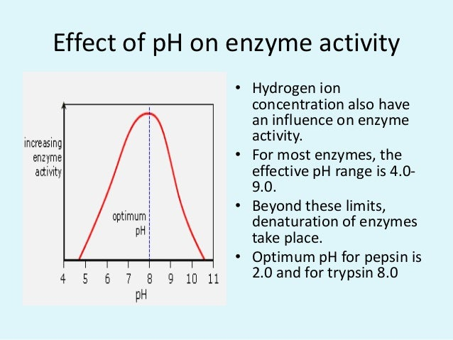 effect of ph on enzyme activity This feature is not available right now please try again later.