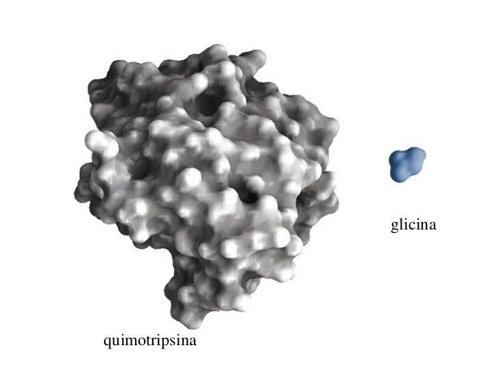 glicinaquimotripsina