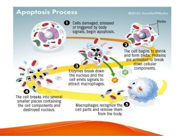 Biochemistry of Aging