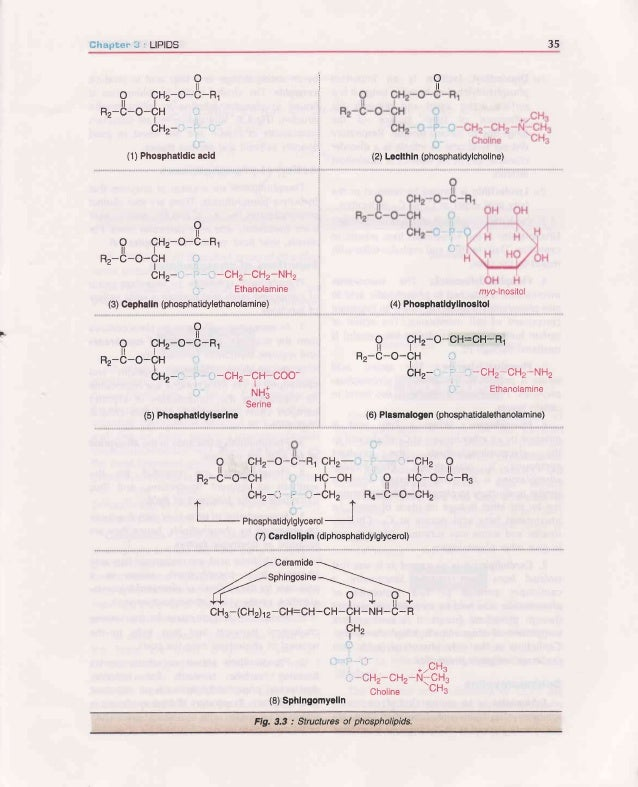 36 BIOCHEMISTF|Y (a) Dipalmitoyl lecithin is an important phosphatidylcholinefoundin lungs,lt isa surface active agent and...